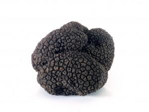 truffel1