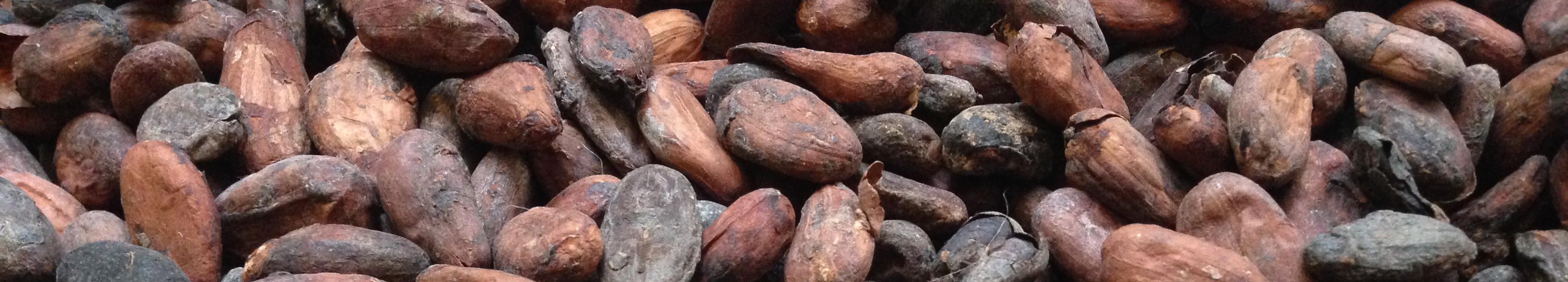 Cacao-bonen-slider